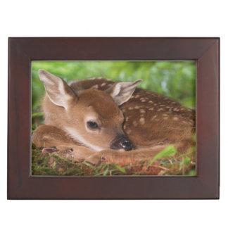 Two day old White-tailed Deer baby, Kentucky. Keepsake Box