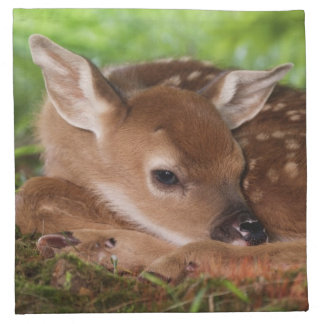 Two day old White-tailed Deer baby, Kentucky. Napkin