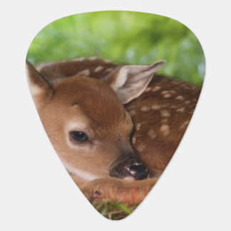 Two day old White-tailed Deer baby, Kentucky. Plectrum