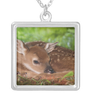 Two day old White-tailed Deer baby, Kentucky. Silver Plated Necklace