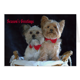 Two Dog Christmas Note Card