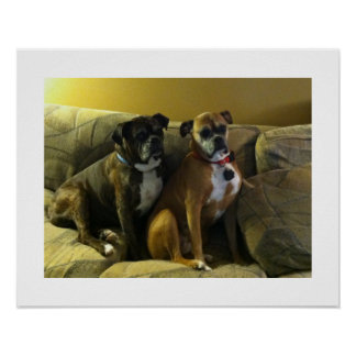 Two Doggies Poster
