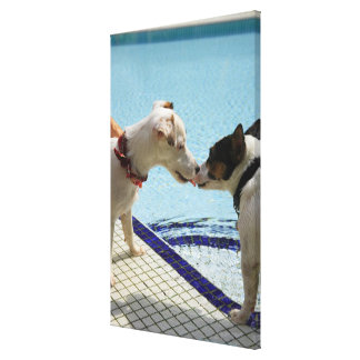 Two Dogs kissing at the poolside Canvas Print