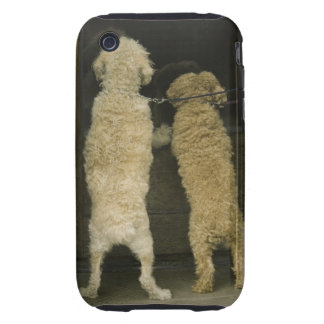 Two dogs looking in door window, rear view iPhone 3 tough cases