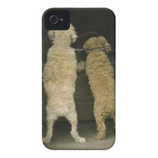 Two dogs looking in door window, rear view iPhone 4 case