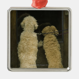 Two dogs looking in door window, rear view Silver-Colored square decoration