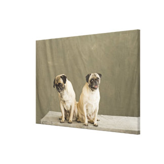 Two dogs posing on a table canvas print