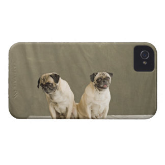 Two dogs posing on a table iPhone 4 Case-Mate cases