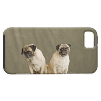 Two dogs posing on a table iPhone 5 cases