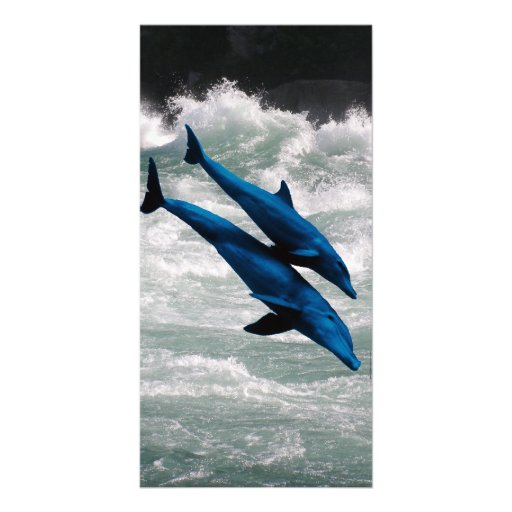 Two Dolphins Swiming at Sea Photo Card