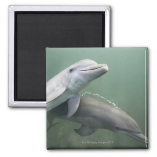 Two Dolphins underwater Magnet