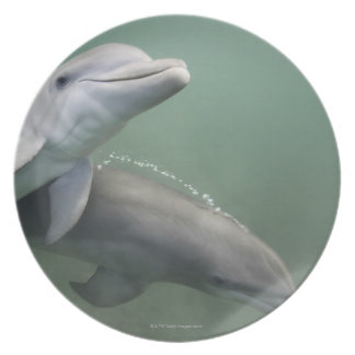 Two Dolphins underwater Plate