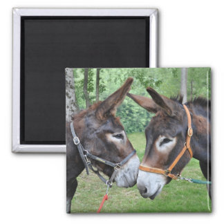 Two donkeys saying hello square magnet