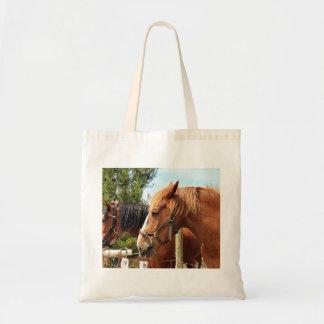Two draft horses