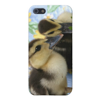 two ducklings one eyeing camera close covers for iPhone 5