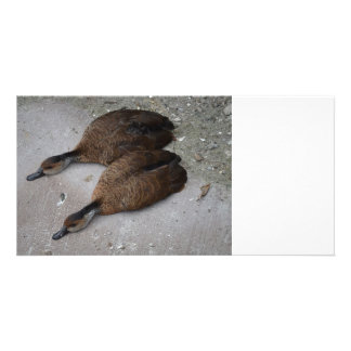 two ducks lying flat from side picture card