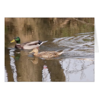 Two Ducks On A River. Card