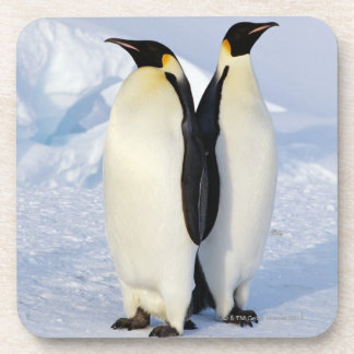 Two Emperor Penguins in Antarctica Coaster