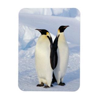 Two Emperor Penguins in Antarctica Rectangular Photo Magnet