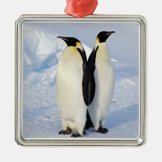 Two Emperor Penguins in Antarctica Silver-Colored Square Decoration