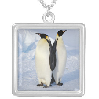 Two Emperor Penguins in Antarctica Silver Plated Necklace