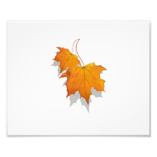 two fall leaves graphic.png photograph