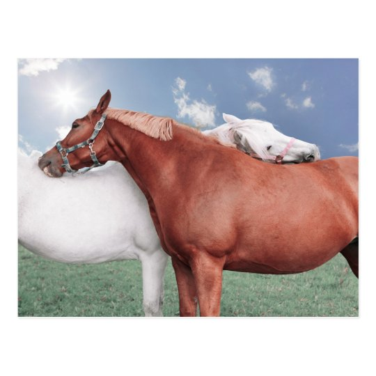 two fell in love horses postcard