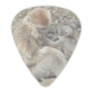 Two female Golden Monkeys with newborns Acetal Guitar Pick