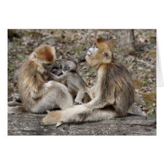 Two female Golden Monkeys with newborns Card