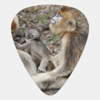 Two female Golden Monkeys with newborns Guitar Pick