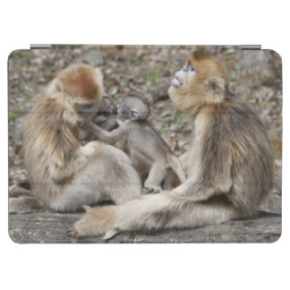 Two female Golden Monkeys with newborns iPad Air Cover