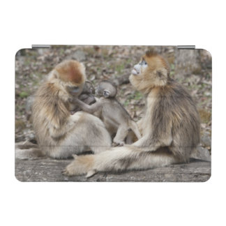 Two female Golden Monkeys with newborns iPad Mini Cover