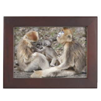 Two female Golden Monkeys with newborns Keepsake Box