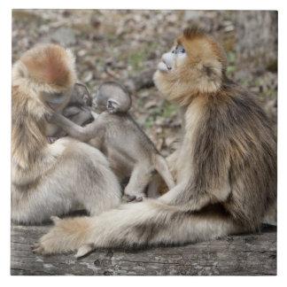 Two female Golden Monkeys with newborns Tile