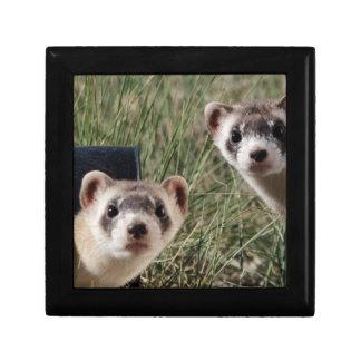 Two Ferrets Gift Box