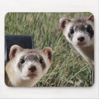 Two Ferrets Mouse Mat