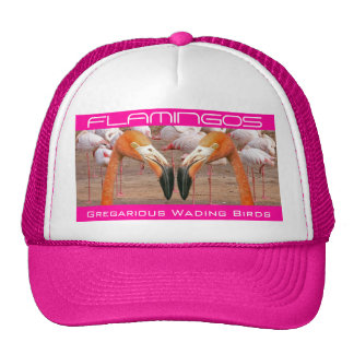Two Flamingo Heads - (Hat) Cap