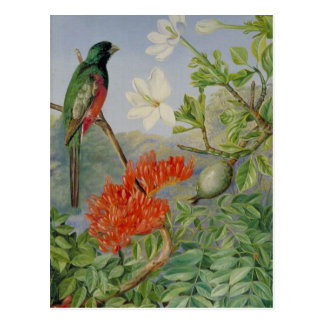 Two Flowering Shrubs of Natal and a Trogon Postcard