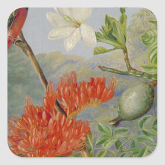 Two Flowering Shrubs of Natal and a Trogon Square Sticker