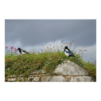 Two For Joy - Magpies On A Wall Print