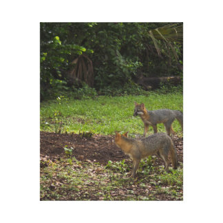 Two Foxes Canvas Prints
