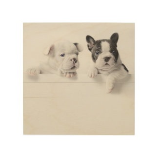 Two French Bulldog Puppies Peer Over A Wall Wood Print