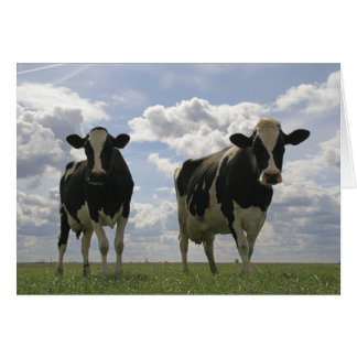 Two Friesian cows Card