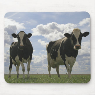 Two Friesian cows Mouse Mat