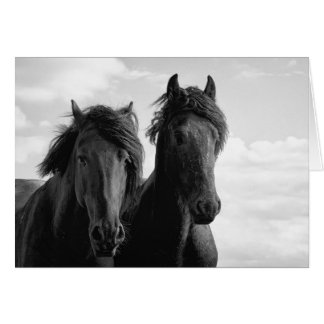 Two Friesian stallions. Card