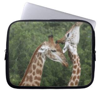 Two Giraffe (Giraffa camelopardalis) necking, Laptop Sleeve