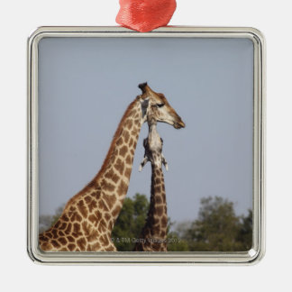Two Giraffe,  Kruger National Park, South Africa Christmas Ornament
