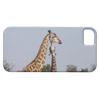 Two Giraffe,  Kruger National Park, South Africa iPhone 5 Covers