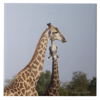 Two Giraffe,  Kruger National Park, South Africa Tile