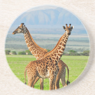Two Giraffes Coaster
